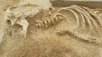 Adulis campagna di scavo 2019. Lo scheletro scoperto nella chiesa degli inglesi. Foto Università Insubria