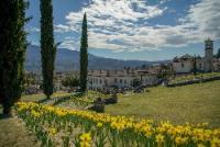 Narcisi a Villa Bozzolo Foto Roberto Losurdo_2019© FAI- Fondo Ambiente Italiano