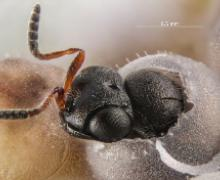 foto Regione Piemonte, vespa samurai