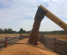 Mietitura grano Lonate Pozzolo 2019